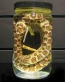 snake in jar